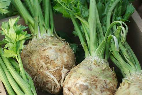 organic-celery-root-from-full-circle_490